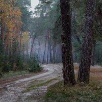 Все та же дорога... :: Юрий Морозов