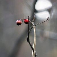 краски природы2 :: Геннадий Свистов