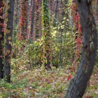 краски природы 4 :: Геннадий Свистов