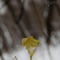 одиночество.... :: Sergey Ganja