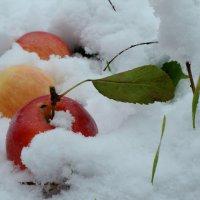 Первый снег. :: Надежда Парфенова