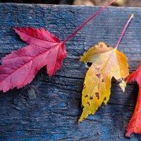 Осеннее трио... :: Арина