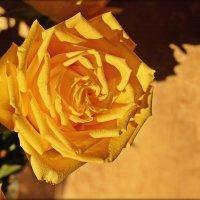Желтое совершенство природы :: Лидия (naum.lidiya)