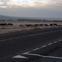 Им не нужны людски дороги... :: Александр Попов