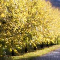Золото Осени :: shvlad