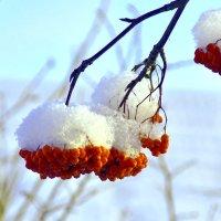 а у нас  снег идет .... :: petyxov петухов