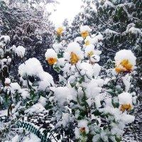 Первый снег (фото сделано 2 ноября 2016) :: Татьяна Королёва