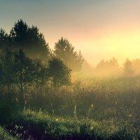Туманное утро :: Владимир Миронов