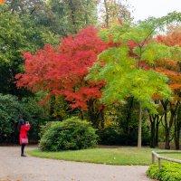 Nordpark, Düsseldorf, Oktober :: Witalij Loewin