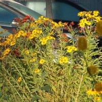 Цветы во дворе :: Фотогруппа Весна.
