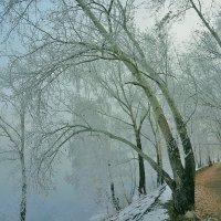Морозным и туманным утром на аллее :: Екатерина Торганская