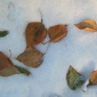 листья на снегу :: игорь