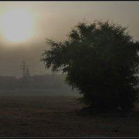 Туман. :: Leonid Korenfeld