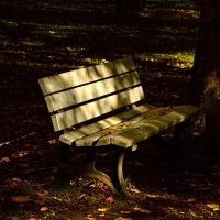 осень в парке :: linnud