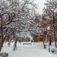 Зима в парке 2 :: Вячеслав Баширов