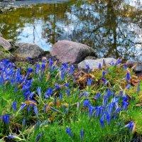 Там, где растут синие цветы... :: Nina Yudicheva
