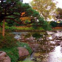 Осень в ботаническом саду :: Nina Yudicheva