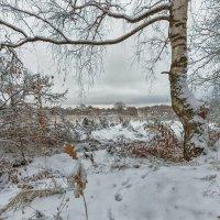 Опять зима. :: Николай Андреев