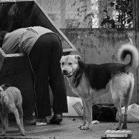 Собачья жизнь... :: Аnatoly Polyakov