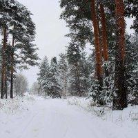 В сказке зимнего леса :: Павлова Татьяна Павлова