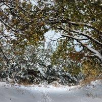 предзимье_первый снег :: Андрей ЕВСЕЕВ