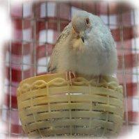 Домашний очаг в надежных крыльях.... :: Tatiana Markova