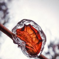 морозный янтарь :: Наталья Ерёменко