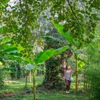Банановые деревья :: Таня Харитонова