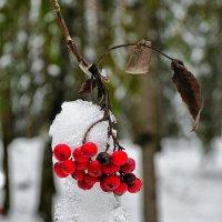 Осенне-зимняя картинка :: Милешкин Владимир Алексеевич