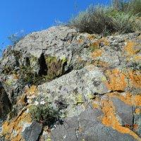 Скалы около петроглифов недалеко от Куюса :: Екатерина Филиппович
