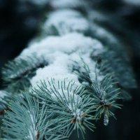 Зимняя красота :: Julia Volkova