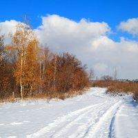 Заметает ноябрь дороги.. :: Андрей Заломленков