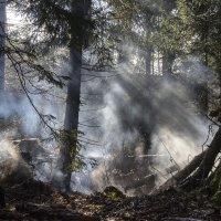 В лесной чаще :: Kliwo