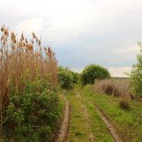 дорога на болоте :: оксана