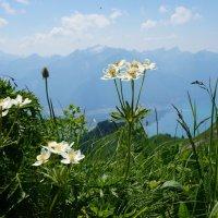 В Швейцарских Альпах ... :: Алёна Савина