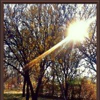 Осень в городе :: Владимир Бровко