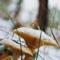 грибы :: Svetlana Uryupina