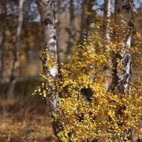 Осенний этюд. :: Лилия *