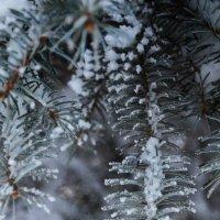 снежек :: Svetlana Uryupina