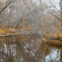 Осень золотая :: Сергей Давыденко