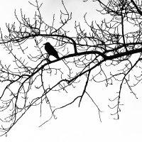 Одиночество в сети :: Татьяна Губина
