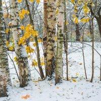 Снег в октябре 27 :: Виталий