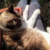 Соседский кот 2 :: Настя Рововых