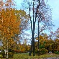 осень в городе :: Елена