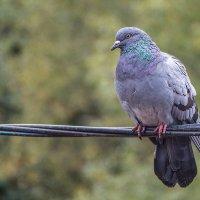 Птицы.. :: Александр Шмалёв