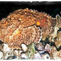 Рыба Камень :: Alexander Dementev