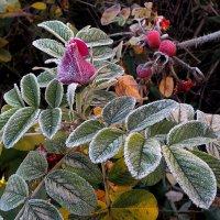 Холодное дуновение зимы :: Николай Белавин