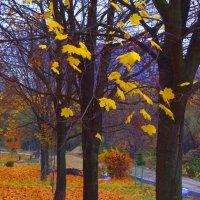 Осенние листья 3. :: Александр Атаулин