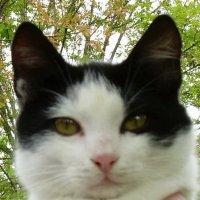 Чернобелая красавица с миндалевидными глазами :: татьяна