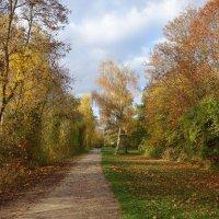 Воздух свежий и прозрачный, Пролетает желтый лист... :: Galina Dzubina